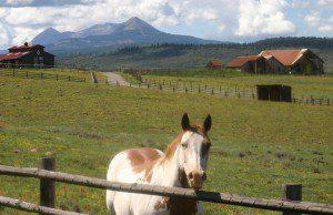 HOrse Ranch w Horse